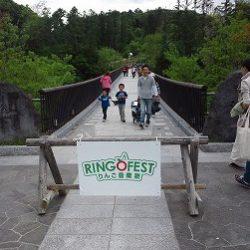 ringo01
